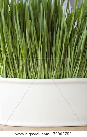 Wheatgrass Background