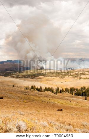 Fire Threatens Bison Pastures In Yellowstone