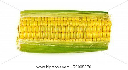 Single Corn Cob Isolated On White Background