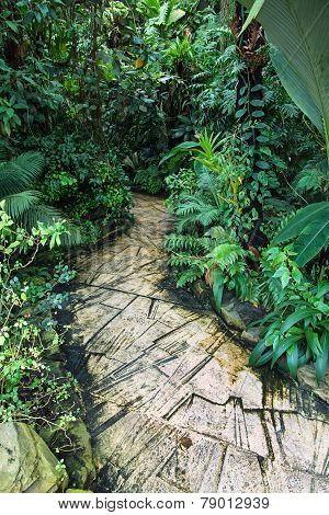 Jungle Trail