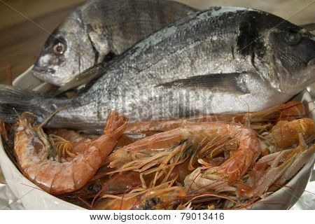 Fresh Fish Of The Mediterranean