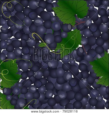 Vector Background Of Blue Bunches Of Grapes