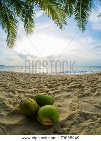Three Coconuts under the tree on the tropical beach in Thailand