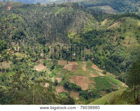 Agricultural Scenery In Sri Lanka