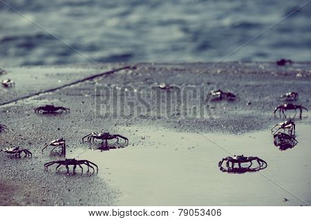 small crabs along the coast in galapagos island