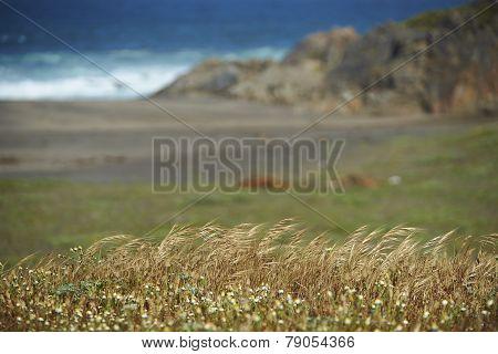 Coastal Chile