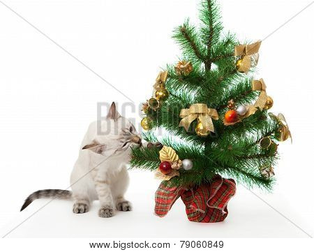 Kitten and artificial Christmas tree.