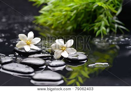 white gardenia with green leaf and therapy stones