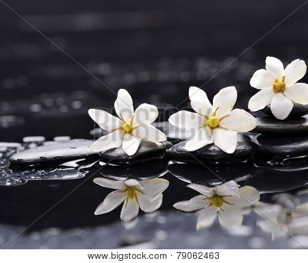 Spa still with three white gardenia on pebbles