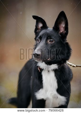Portrait Of A Black Dog.