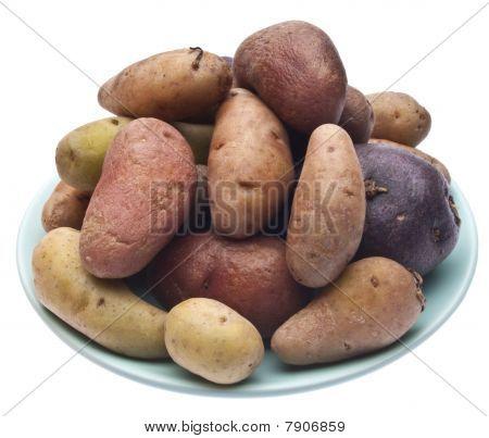 Fingerling Artisan Potatoes