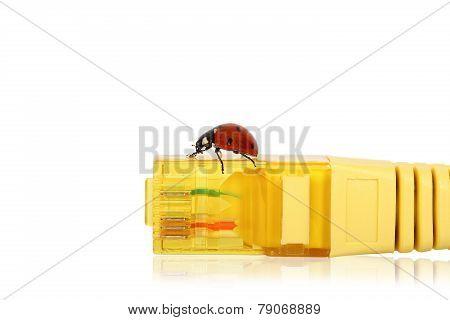 internet ladybug