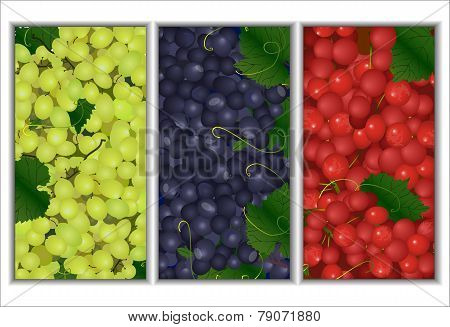 Set Of Vector Backgrounds Of The Different Types Of Grapes