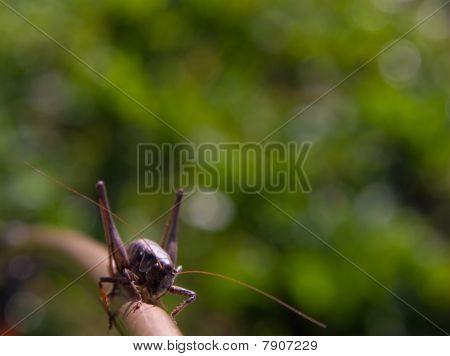 Cool Grasshopper On A Stick