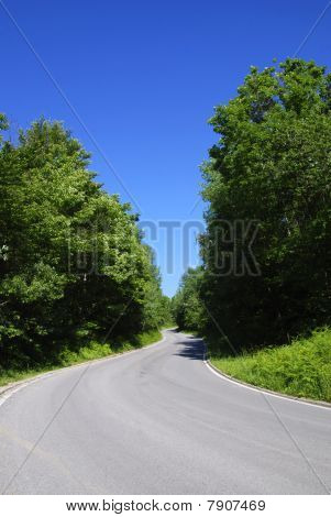 summer on forest road