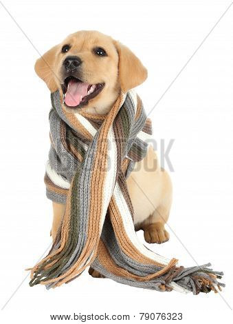 Adorable Puppy With Scarf