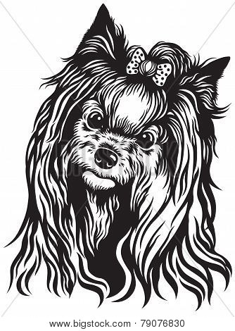 yorkshire terrier black and white