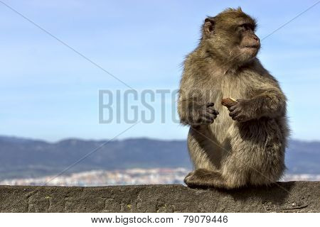 Monkey Sitting On A Stone Fence