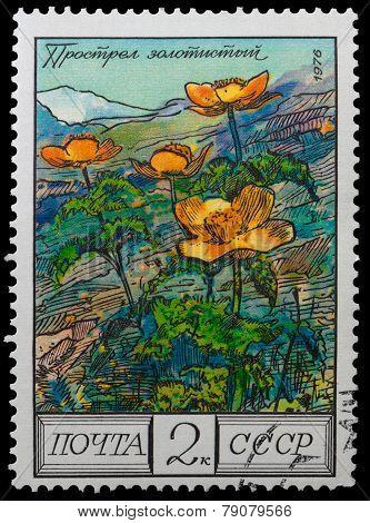Flowers Mountainous Caucasus