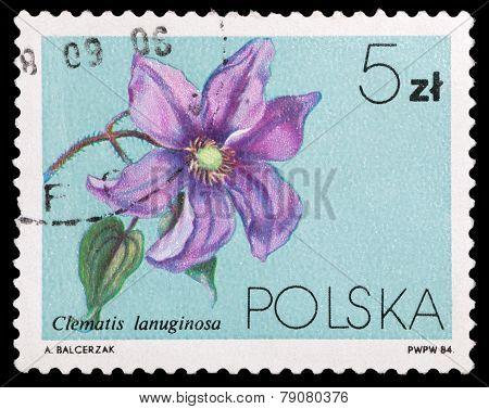 Flowers  Clematis Lanuginosa