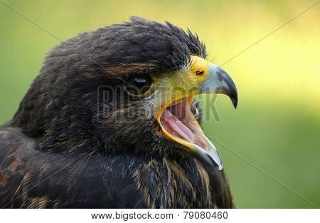 Birds of prey.