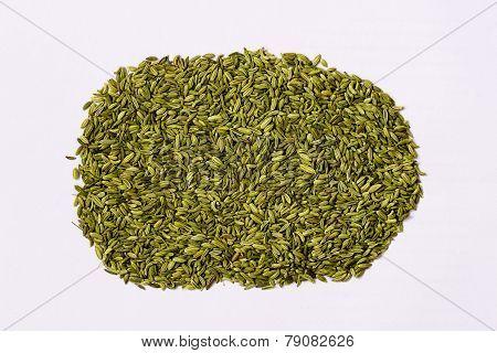 fennel seeds background kept under sunlight for drying