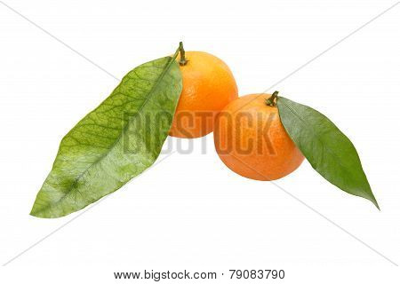 Two Fresh Tangerine
