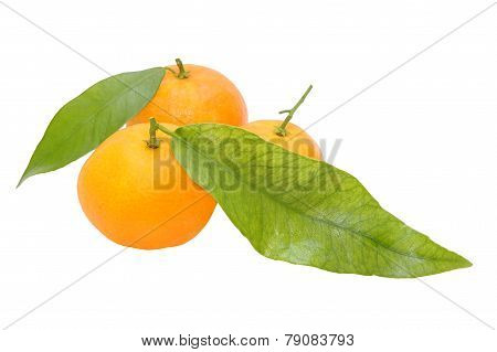 Three Fresh Tangerines With Green Leaves Isolated On White Background.