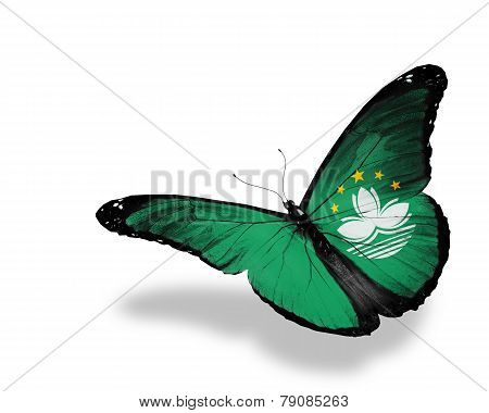 Macau Flag Butterfly Flying, Isolated On White Background
