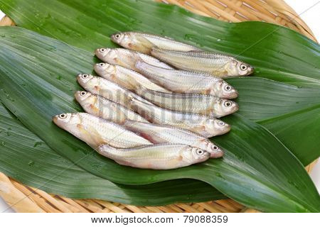 raw honmoroko, japanese willow gudgeon
