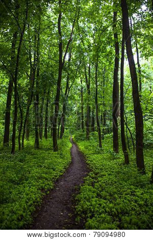 The Path In A Green Summer Forest