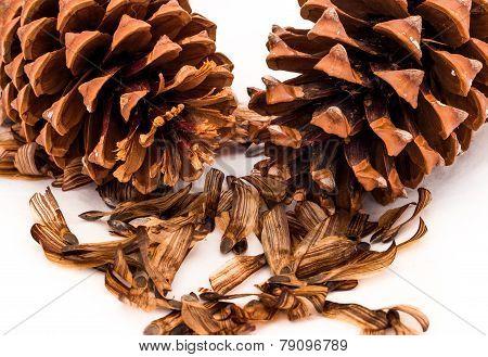 Pine Cones & Seeds