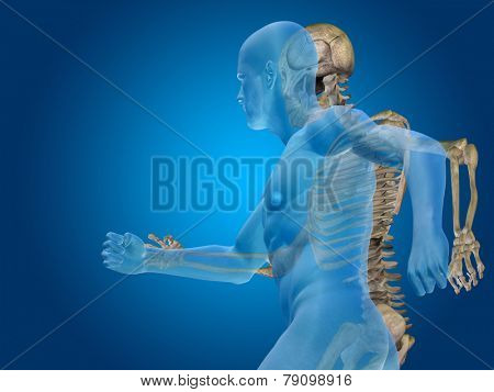 Anatomy concept or conceptual human man medical or health body chest, head blue bright background