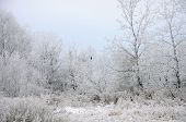 stock photo of raven  - White hoarfrost covering all trees and black raven - JPG