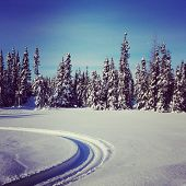picture of blanket snow  - scenic instagram of snowmobile tracks in snow on a bright day - JPG