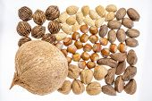 picture of pecan nut  - variety of nuts  - JPG