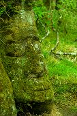 pic of rock carving  - large rock carving floreana island galapagos ecuador  - JPG