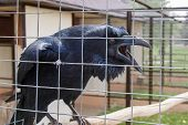 image of inhumane  - animals and birds in a cage at the zoo  - JPG