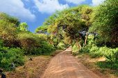 picture of dirt road  - African dirt road in tropical Africa near Manyara Lake at sunset time Tanzania - JPG