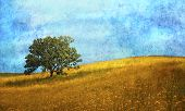 picture of single flower  - An artistic rendition of single oak tree in the midst of flower filled meadow with a whimsical twist - JPG