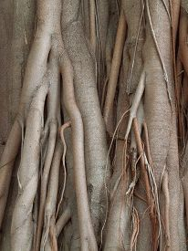 picture of twisty  - detail shot of some wooden roots seen in Sri Lanka - JPG