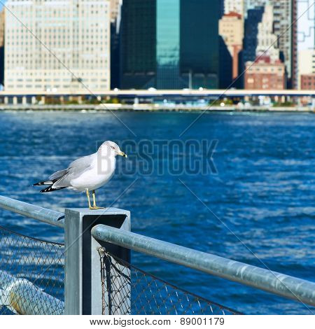 Seagull with Manhattan skyline in background, New York City. Focus on the bird.