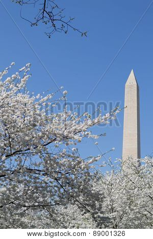 Washington Memorial Between White Flower