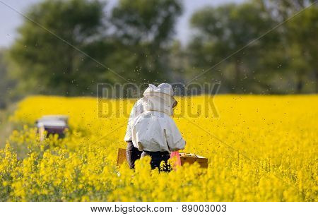 Apiarists In Rapeseed Field
