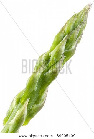 Asparagus Head Isolated on White Background
