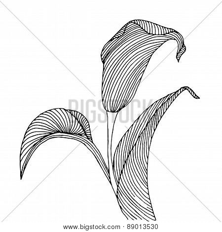Floral background with flower calla