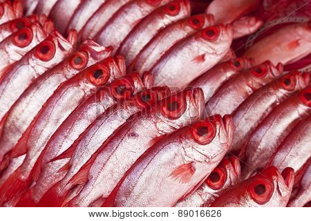 Group of Kapok fish, bigeye
