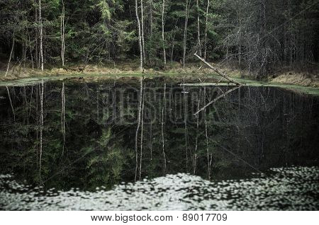 Small Lake In Gloomy Forest Reflection In Water