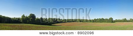 Agricultural Field On A Forest Edge