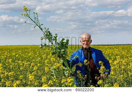 old farmer in a field researching plants